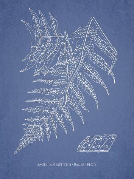 Ferns Digital Art - Sagenia Griffithii by Aged Pixel