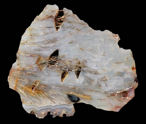 Geodes Photograph - Sagenitic Agate by Natural History Museum, London/science Photo Library