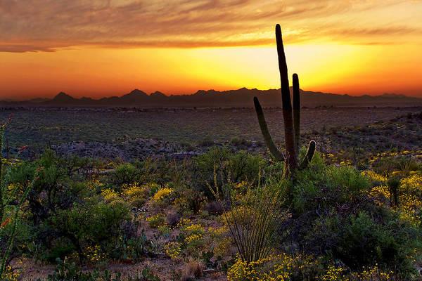 Photograph - Saguaro And The Setting Sun by Leda Robertson