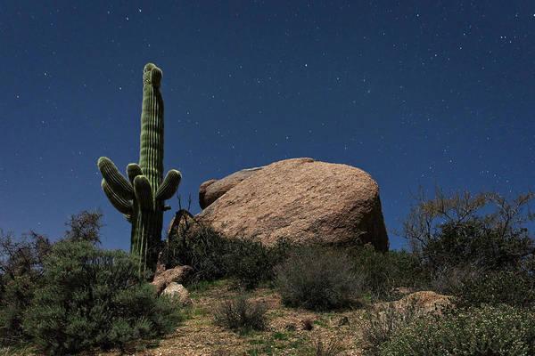 Saguaros Photograph - Saguaro At Night by Rick Berk