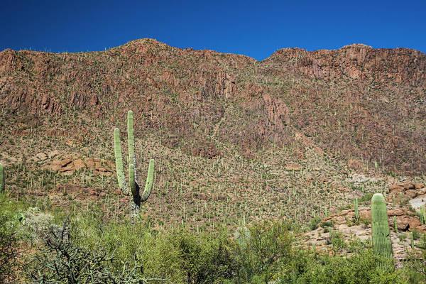 Cactaceae Photograph - Saguaro Cactus And Desert Flora by Jim West/science Photo Library