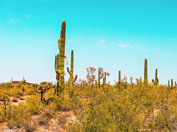 Photograph - Saguaro Cactus In Organ Pipe Monument by Bob and Nadine Johnston