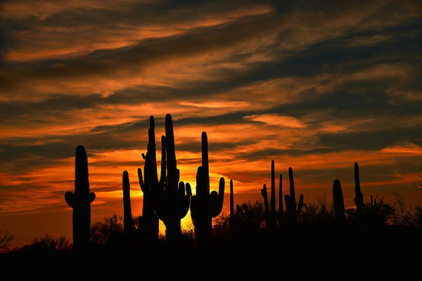 Photograph - Saguaro Cactus Sunset by Walt Sterneman