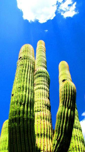 Photograph - Saguaro En El Cielo by Michelle Dallocchio