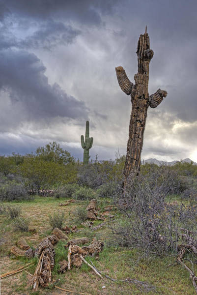 Photograph - Saguaro Ending by Darlene Bushue
