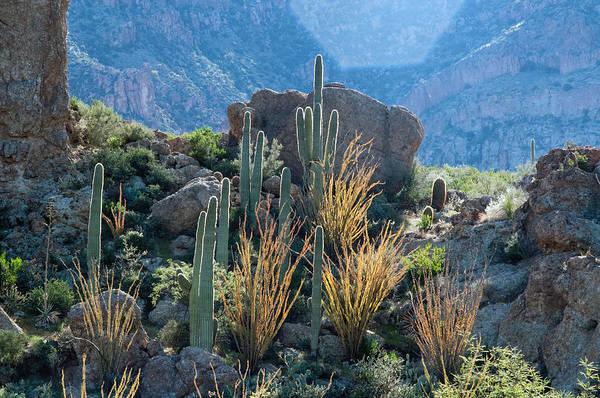 Photograph - Saguaro Mix by Tam Ryan