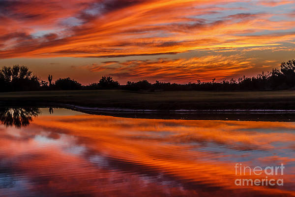 Yuma Photograph - Saguaro Reflection by Robert Bales