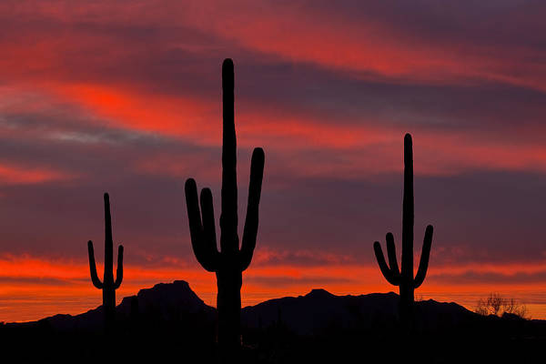 Sonoran Desert Photograph - Saguaro Sunset by Guy Schmickle