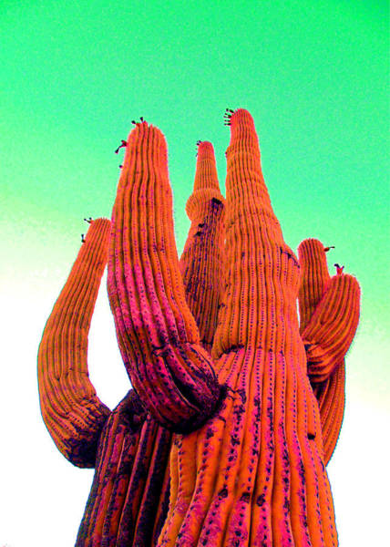 Mixed Media - Saguaro Unity by Michelle Dallocchio