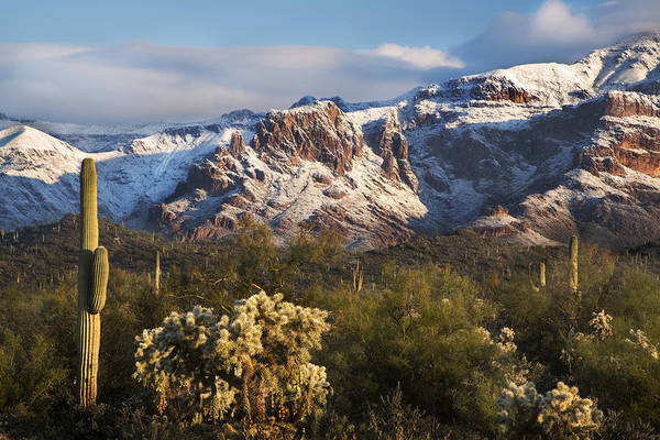 Photograph - Saguaro With Snowy Mountains by Dave Dilli