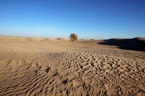 Tunisia Wall Art - Photograph - Sahara Landscape, Douz, Kebili by Godong / Robertharding