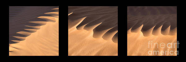 Wall Art - Photograph - Sahara Triptych by Delphimages Photo Creations