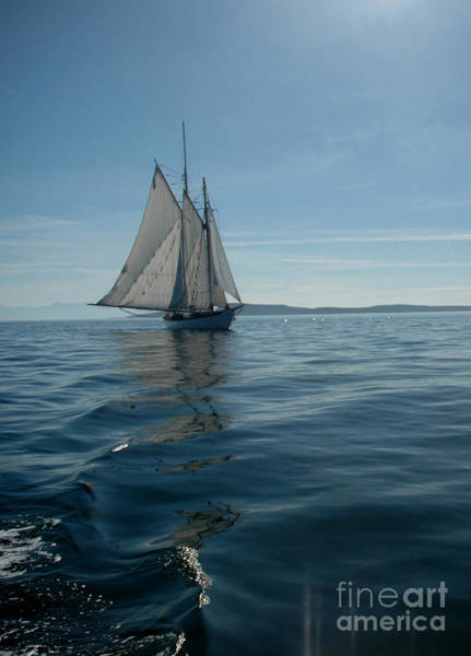 Sail The Blue Art Print