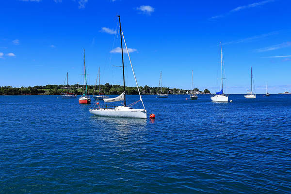 Photograph - Sailboats At Youngstown by Rachel Cohen