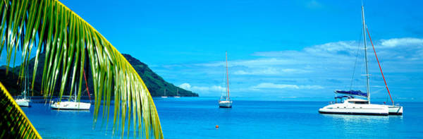 French Polynesia Photograph - Sailboats In The Ocean, Tahiti, Society by Panoramic Images