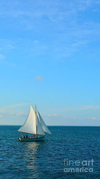 Squid Row Photograph - Sailing In Vineyard Haven by Matt Dana