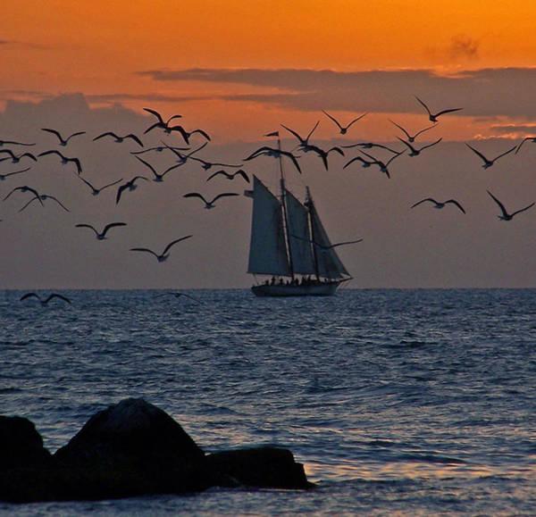 Photograph - Sailing  by Jennifer Robin
