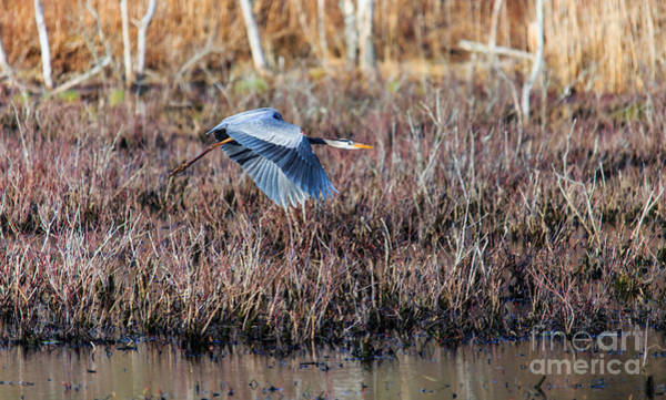 Photograph - Sailing Through The Marshes by Mary Lou Chmura