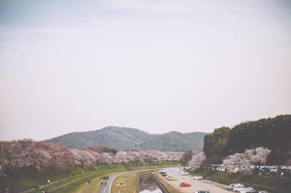 Okayama Prefecture Photograph - Sakura Trees By The River by Nazra Zahri