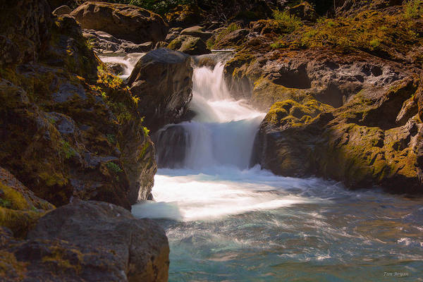 Photograph - Salmon Falls Olympic National Park by Tim Bryan