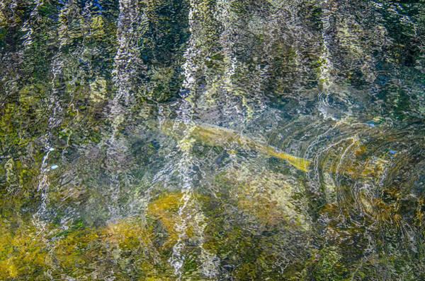 Photograph - Salmon Art by Roxy Hurtubise