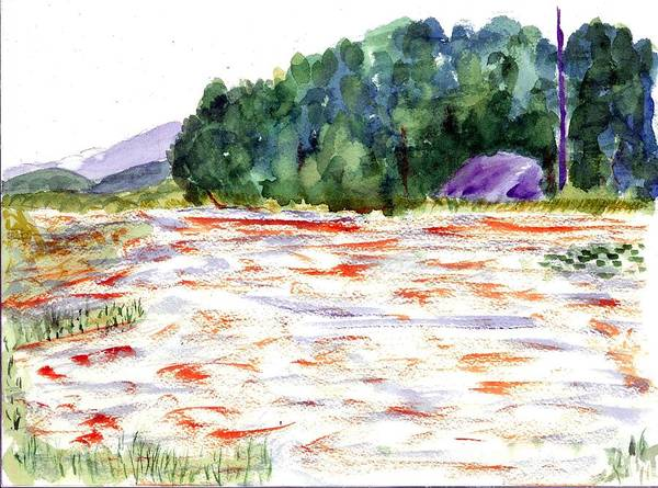 Adirondack Mountains Painting - Salmon Run by David Crowell