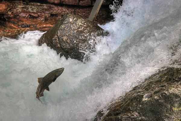 Photograph - Salmon Run by Randy Hall