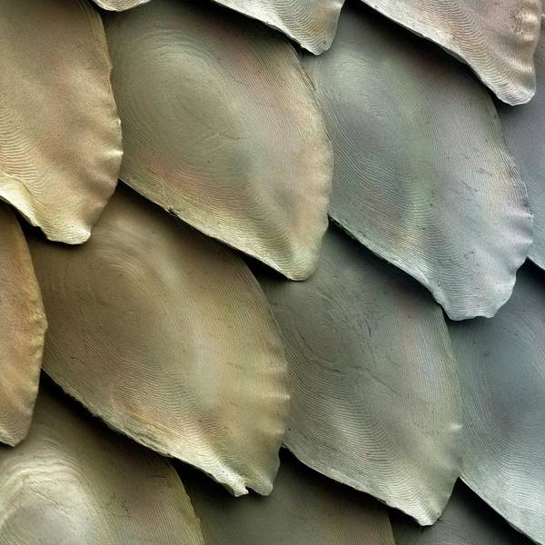 Wall Art - Photograph - Salmon Scales by Power And Syred