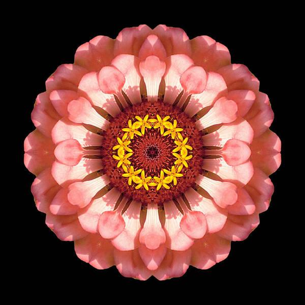Photograph - Salmon Zinnia Elegans Iv Flower Mandala by David J Bookbinder