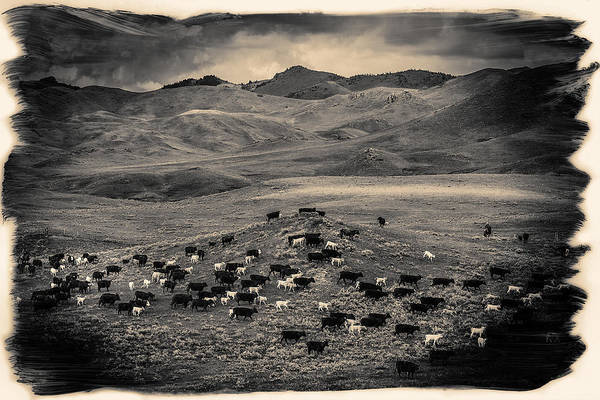 Bear Country Wall Art - Photograph - Salt And Pepper Distressed by Todd Klassy