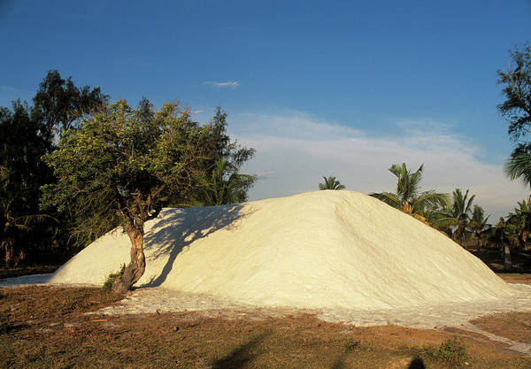 Mound Photograph - Salt Pile by Sinclair Stammers/science Photo Library