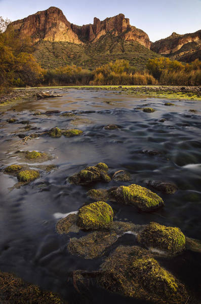 Photograph - Salt River Mossy Vertical by Dave Dilli