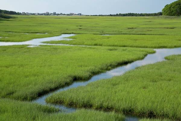 Wall Art - Photograph - Saltmarsh Drainage Ditches by Bob Gibbons/science Photo Library
