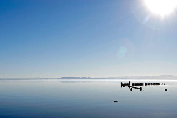 Photograph - Salton Blue by Peter Tellone