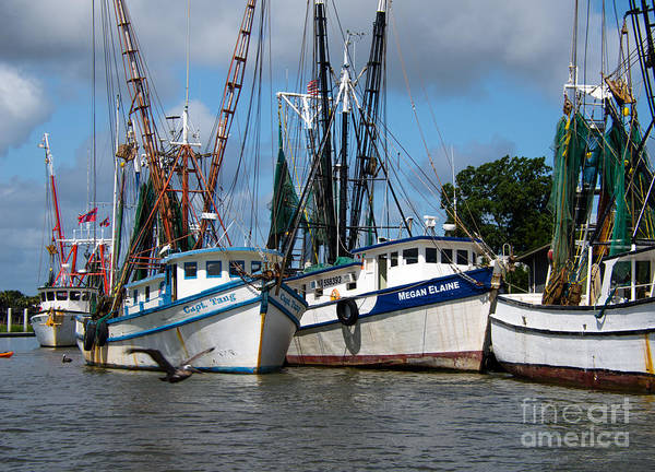 Photograph - Saltwater South  by Dale Powell