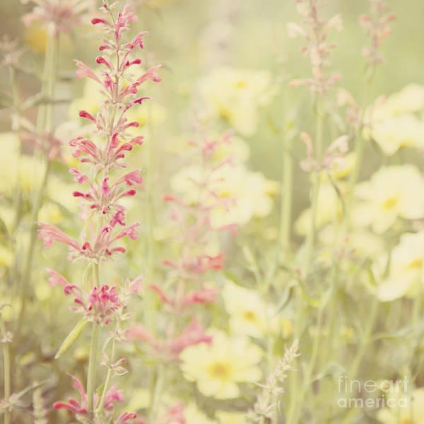 Photograph - Salvia Flower 2 by Chris Scroggins