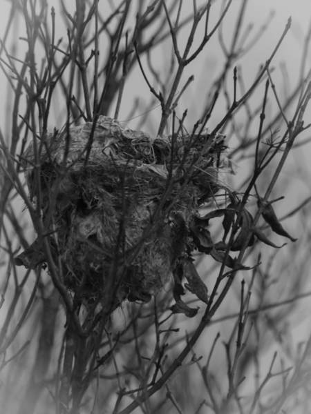Empty Nest Wall Art - Photograph - Same Time Next Year by Thomas Young