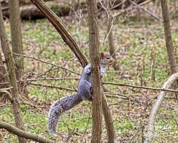Photograph - Sammy The Squirrel by Jim Lepard