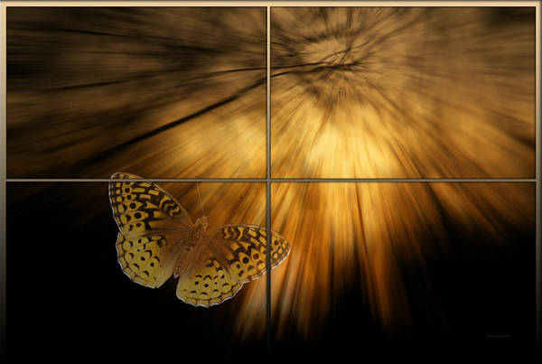 Wall Art - Photograph - Sample Paneled Following The Light Yellow Butterfly by Thomas Woolworth