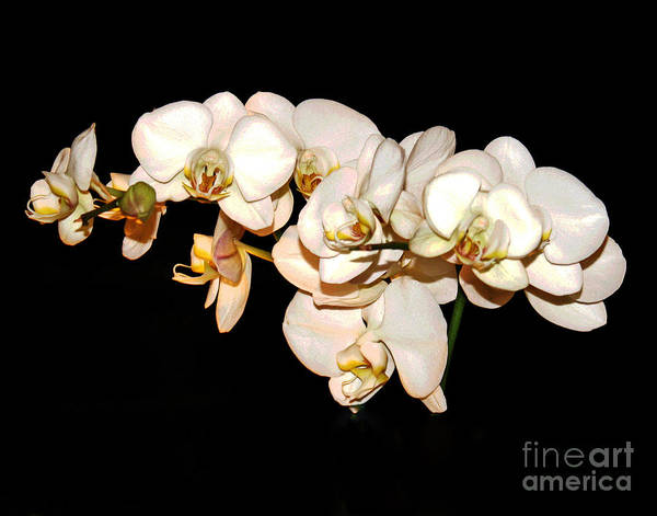 Photograph - San Francisco Orchids by Larry Oskin