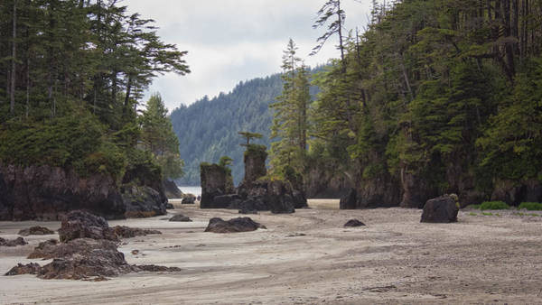 Photograph - San Josef Bay Sea Stacks by Carrie Cole