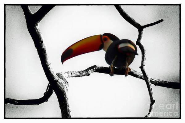 Photograph - San Matias- Brazil by Karla Weber