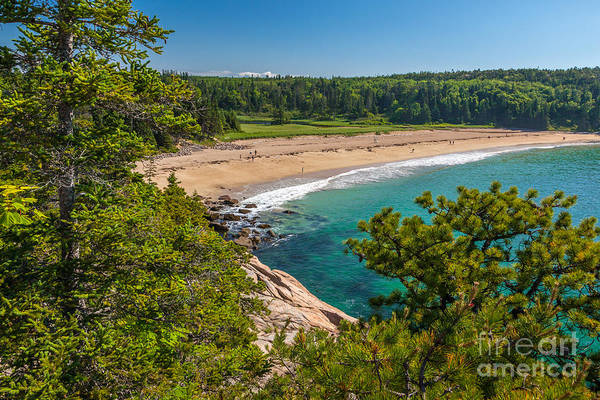 Photograph - Sand Beach In Acadia by Susan Cole Kelly