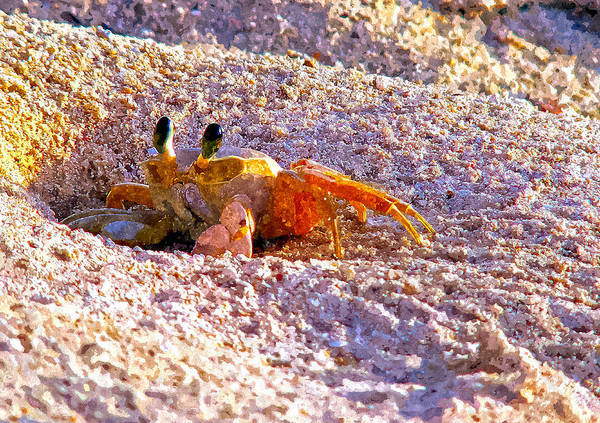 Painting - Sand Crab by Rick Mosher