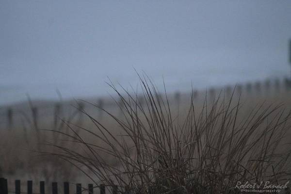 Photograph - Sand Dune And Fenced Grasses by Robert Banach