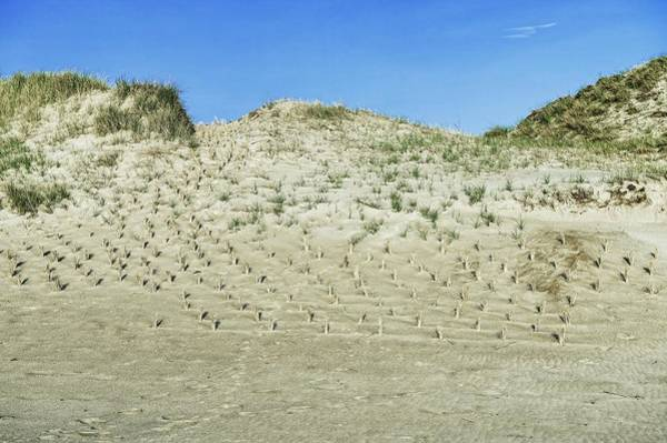 Lewes Photograph - Sand Dune Conservation by John Greim/science Photo Library