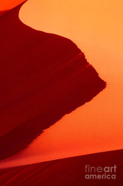 Photograph - Sand Dune Curves Coral Pink Sand Dunes Arizona by Dave Welling