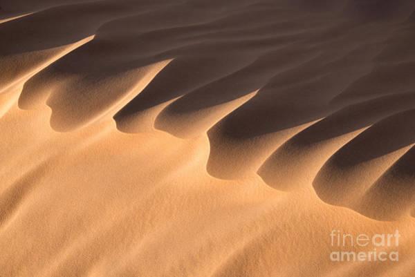 Caravan Photograph - Sand Dune Detail by Delphimages Photo Creations