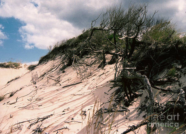 Photograph - Sand Dune by Gerlinde Keating - Galleria GK Keating Associates Inc