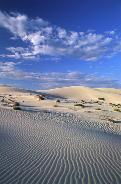 Sand Photograph - Sand Dunes Carved By Wind by John W Banagan